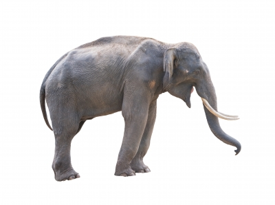 Elephant that represents things holding your business back.